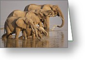 Zambia Photo Greeting Cards - Elephant family Greeting Card by Johan Elzenga