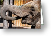 Feeding Greeting Cards - Elephant Feeding Time at the Zoo Greeting Card by Gary Whitton