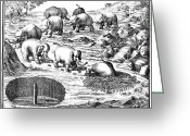 The Cape Greeting Cards - Elephant Hunt, 1719 Greeting Card by Granger