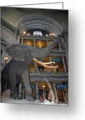 National Museum Of America History Greeting Cards - Elephant in the room Greeting Card by LeeAnn McLaneGoetz McLaneGoetzStudioLLCcom
