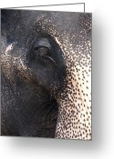 Old Face Greeting Cards - Elephant Greeting Card by Jane Rix