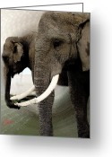 Colette Greeting Cards - Elephant Meet Greeting Card by Colette Hera  Guggenheim