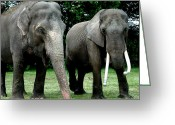 Greet Greeting Cards - Elephant Meeting Greeting Card by Colette Hera  Guggenheim