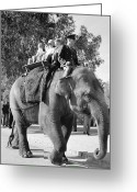 Johannesburg Greeting Cards - Elephant Ride Greeting Card by Ejor