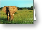 Game Animals Photo Greeting Cards - Elephant Greeting Card by Sebastian Musial