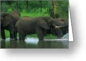 African Animals Greeting Cards - Elephant Shower Greeting Card by Bruce J Robinson