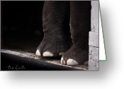 Closeup Greeting Cards - Elephant Toes Greeting Card by Bob Orsillo