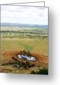 Waterhole Greeting Cards - Elephants at the Waterhole Greeting Card by David Gardener