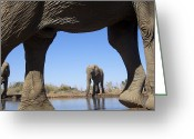 Waterhole Greeting Cards - Elephants At Waterhole, Mashatu, Botswana Greeting Card by Heinrich van den Berg