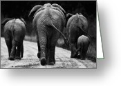 White Greeting Cards - Elephants in black and white Greeting Card by Johan Elzenga
