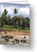 India Greeting Cards - Elephants in the river Greeting Card by Jane Rix