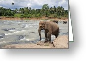 India Greeting Cards - Elephants Greeting Card by Jane Rix