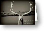 Elk Greeting Cards - Elk and Blackbird Ranch Gate Greeting Card by Gus McCrea