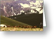 Calf Greeting Cards Greeting Cards - Elk at Rocky Mountain National Park Greeting Card by Dottie Gillespie