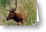 Oregon Wildlife Digital Art Greeting Cards - Elk Greeting Card by Kami McKeon