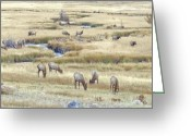 Rocky Mountains Greeting Cards Greeting Cards - Elk Soft light Greeting Card by James Steele