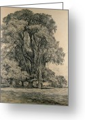 Oak Leaf Drawings Greeting Cards - Elm trees in Old Hall Park Greeting Card by John Constable