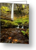 Fall Leaves Photo Greeting Cards - Elowah Perspective Greeting Card by Mike  Dawson