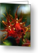 Flowers Of Nature Greeting Cards - Embraced by an Orchid Greeting Card by Karen Wiles