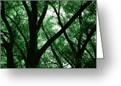 Blacks Greeting Cards - Emerald Forest Greeting Card by Steven Milner