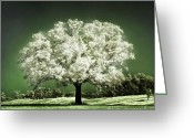 Oak Tree Greeting Cards - Emerald Meadow square Greeting Card by Hugo Cruz
