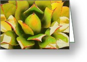 Desert Greeting Cards - Emergence Greeting Card by Robert Hooper