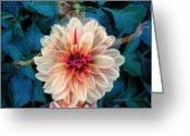 Photographic Art Greeting Cards - Emergence Greeting Card by Torie Tiffany