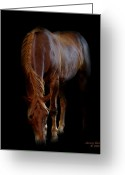 Caballo Greeting Cards - Emerging from the Night Greeting Card by Jenny Gandert