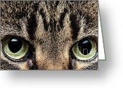 Watchful Eye Greeting Cards - Emmy Eyes Greeting Card by Andee Photography