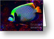Marine Animals Greeting Cards - Emperor Angelfish Greeting Card by Wingsdomain Art and Photography