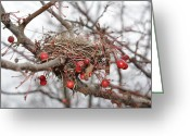 Merging Greeting Cards - Empty Nest Greeting Card by Colleen Rizzo Gerlach