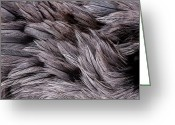 Feathery Greeting Cards - Emu Feathers Greeting Card by Hakon Soreide