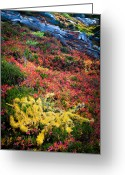 Huckleberry Greeting Cards - Enchanted colors Greeting Card by Inge Johnsson