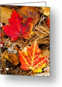 Award Greeting Cards - End Of Fall Greeting Card by Bob Bailey