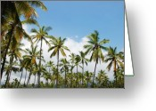 Big Island Greeting Cards - Endless Palms Greeting Card by Kelly Wade