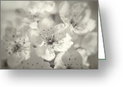 Black And White Floral Greeting Cards - English Hawthorn Greeting Card by Scott Norris
