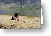 Dog Photographs Greeting Cards - Enjoying a lake day Greeting Card by John  Greaves