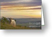 Mound Greeting Cards - Enjoying The Evening Greeting Card by Angel  Tarantella