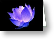 Lotus Greeting Cards - Enlightened Greeting Card by Photodream Art