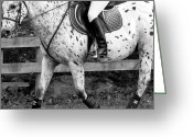 Side Saddle Greeting Cards - Enter Working Trot Greeting Card by East Coast Barrier Islands Betsy A Cutler