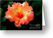 Foilage Greeting Cards - Enticement Greeting Card by Karen Wiles