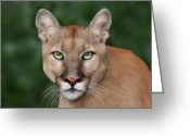 Animals Greeting Cards - Enya Greeting Card by Big Cat Rescue