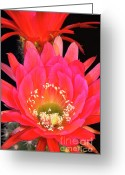 Night Blooming Greeting Cards - Epic Greeting Card by Saija  Lehtonen