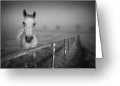 Black And White Animal Greeting Cards - Equine Fog Greeting Card by Taken with passion
