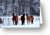 Winter Trees Greeting Cards - Equine Winter Greeting Card by Karen M Scovill