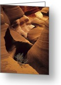Tumbleweed Greeting Cards - Eroded Sandstone And A Tumbleweed Greeting Card by Ralph Lee Hopkins