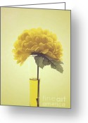 "\""floral Still Life\\\"" Greeting Cards - Estillo - s03-01q Greeting Card by Variance Collections"