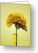"\""floral Still Life\\\"" Greeting Cards - Estillo - s03-01q2 Greeting Card by Variance Collections"