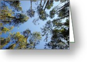 Shine Greeting Cards - Eucalyptus Greeting Card by Carlos Caetano
