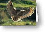 Owl Photography Greeting Cards - Eurasian Eagle-owl Bubo Bubo Adult Greeting Card by Dietmar Nill